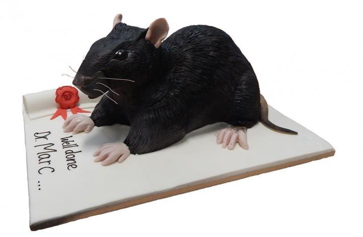 Graduation Rat